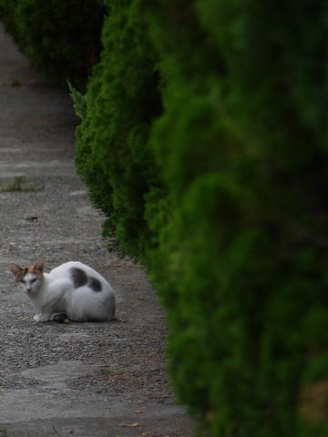 野良猫を遠くから