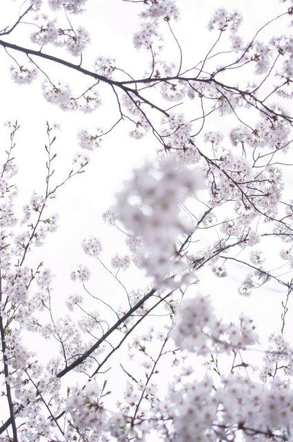 枝を意識した構図